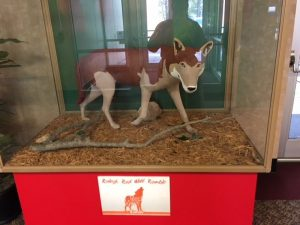 A brown and tan wolf sculpture encased in glass